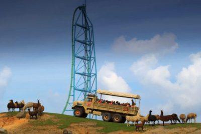 Six Flags Safari Alpaca; Sundance Vacations