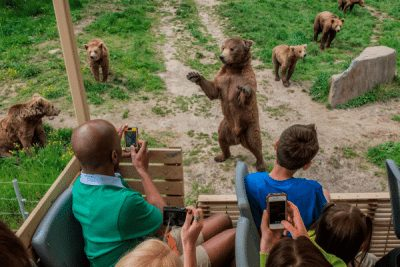 Six Flags Safari Bear Cubs; Sundance Vacations