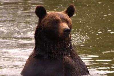 Six Flags Safari Bear; Sundance Vacations