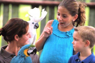 Six Flags Safari Birds; Sundance Vacations