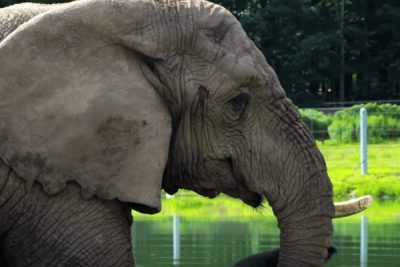 Six Flags Safari Elephant; Sundance Vacations