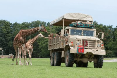 Six Flags Safari Giraffe2; Sundance Vacations