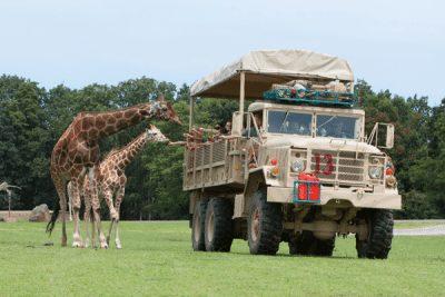 Six Flags Safari Giraffe2; Sundance Vacations