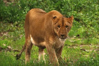 Six Flags Safari Lion; Sundance Vacations