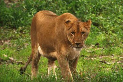 Six Flags Safari Lion; Sundance Vacations
