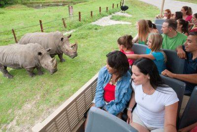 Six Flags Safari Rhinoceros; Sundance Vacations