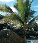 sundance vacations suzanne d