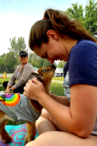 Sundance Vacations Goat Yoga