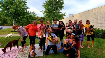 Sundance Vacations Goat Yoga Feature Photo